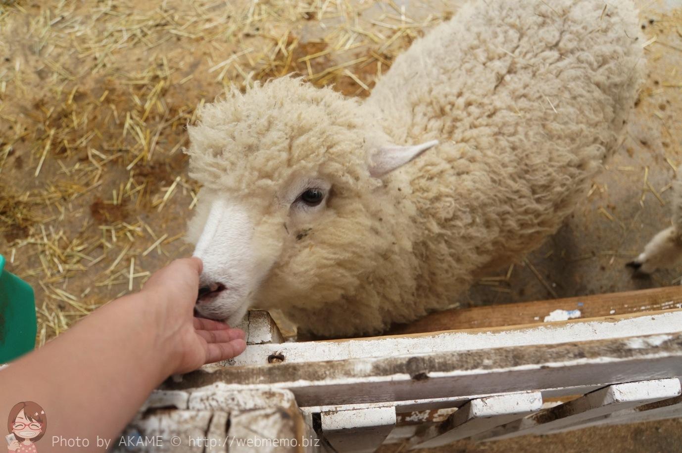 モッコモコの羊にエサやり・触れ合えたり