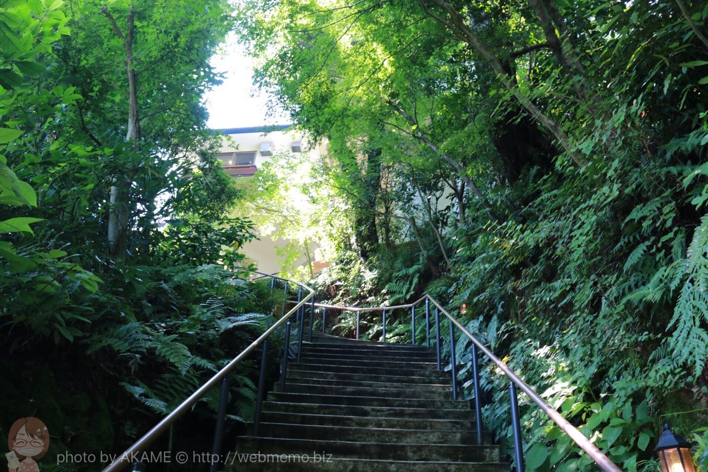 樹ガーデン 階段