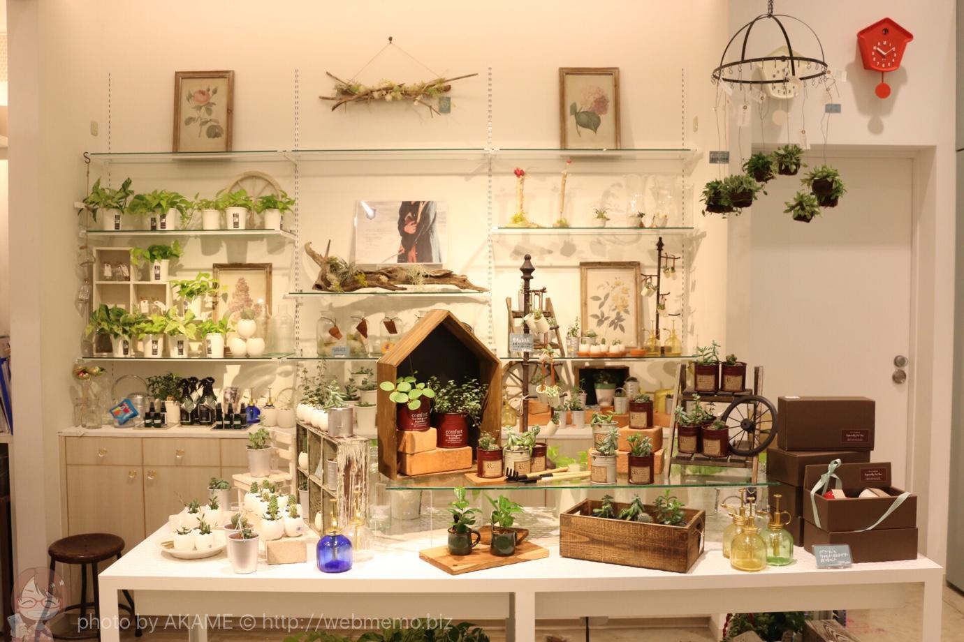 癒しの可愛い緑の植物やエアプランツの販売