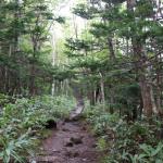 [Å] 世界自然遺産に圧巻…知床五湖はヒグマ遭遇回避レクチャーを受けて大森林を散策