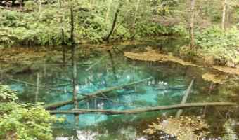 神秘的すぎる!コバルトブルーの「神の子池」は誰もが見惚れる(北海道・清里)