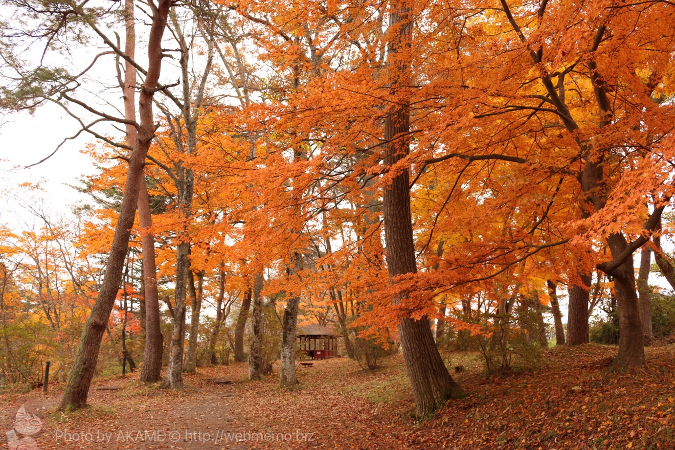 厳美渓周辺の紅葉