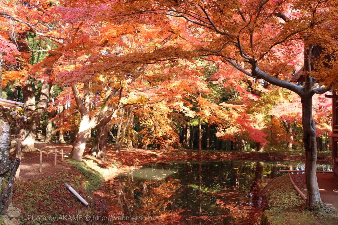中尊寺の紅葉が見頃!赤とオレンジの息をのむ光景に大感激