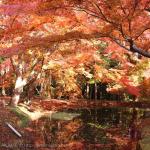[Å] 中尊寺の紅葉が見頃!赤とオレンジの息をのむ光景に大感激