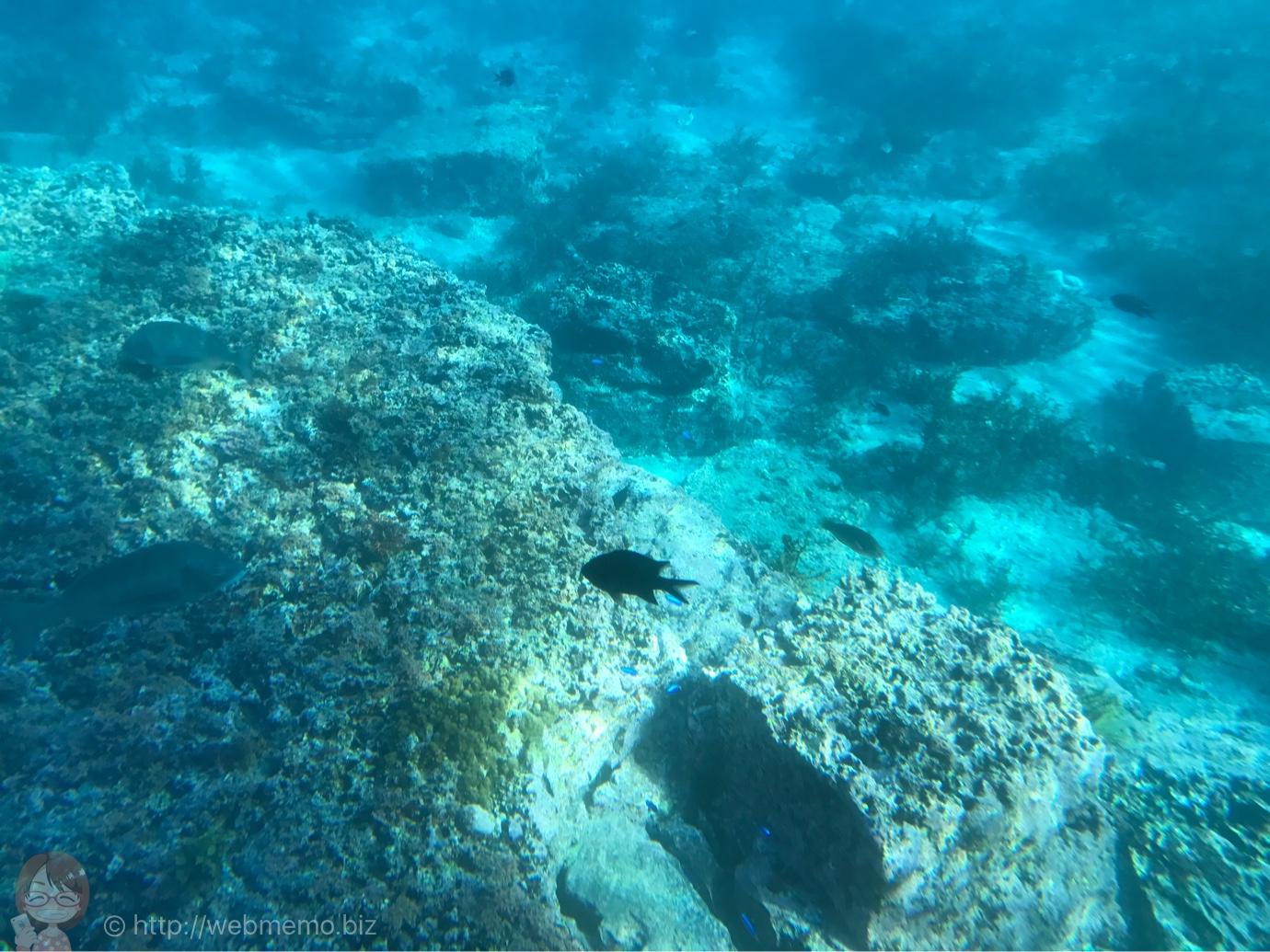 [Å] 海の宝石が綺麗!千葉 館山の海中観光船から見た沖ノ島の海がダイビングの世界