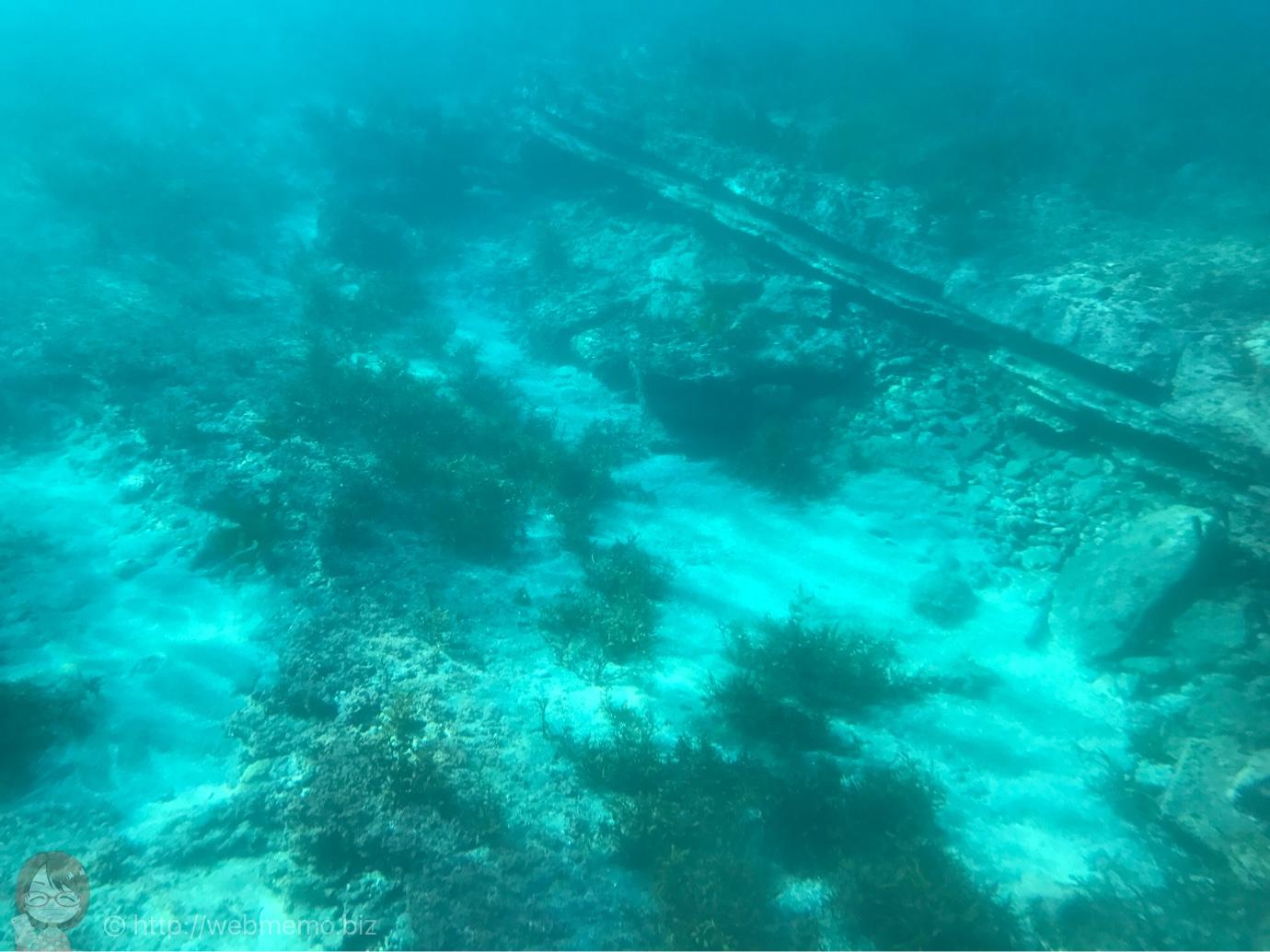 海中観光船 たてやま号から見た魚