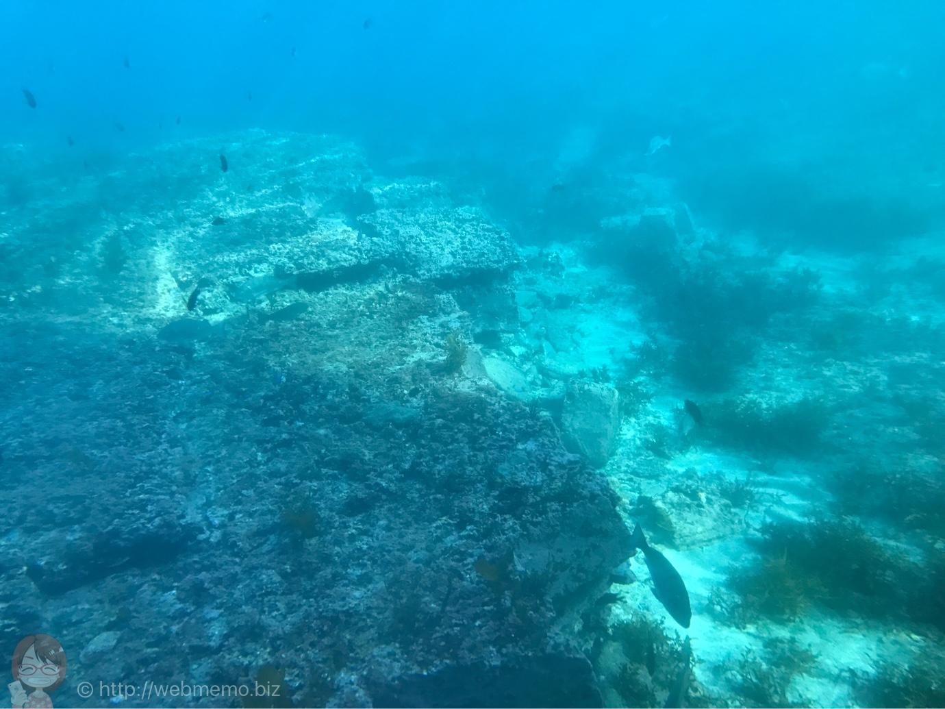 海中観光船 たてやま号から見た海の景色