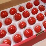 [Å] こっそり農遠で届いた「ジュリエッタ」は食感も味も別格!希少・高級ミニトマトを500円でゲット