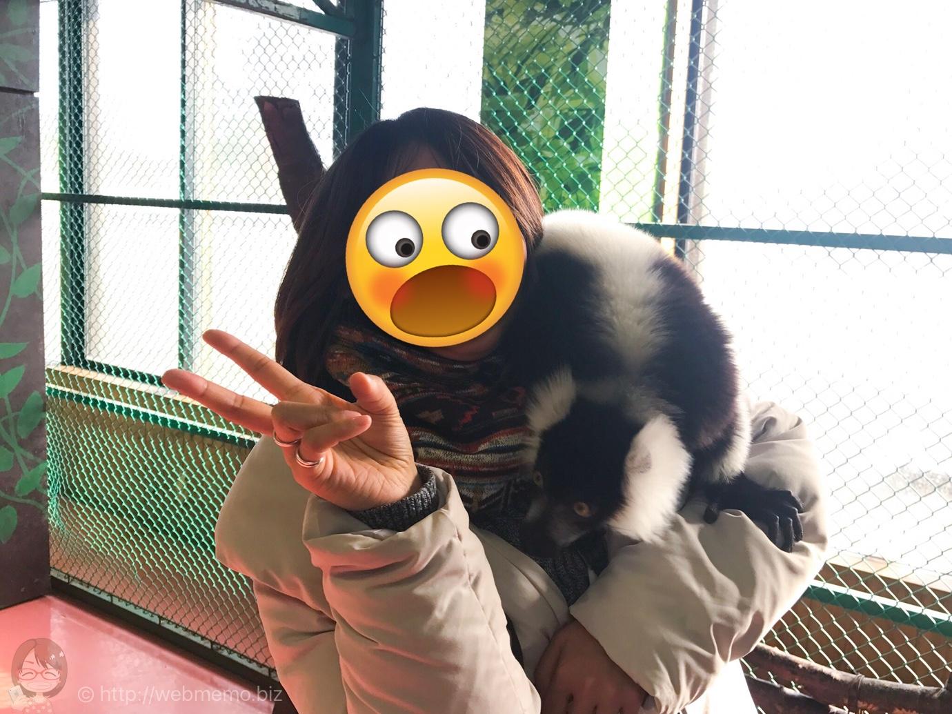 エリマキキツネザル