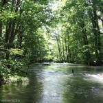 青森県「奥入瀬渓流」8.9キロ散策してジブリ感ある大自然の緑と渓流に癒された!