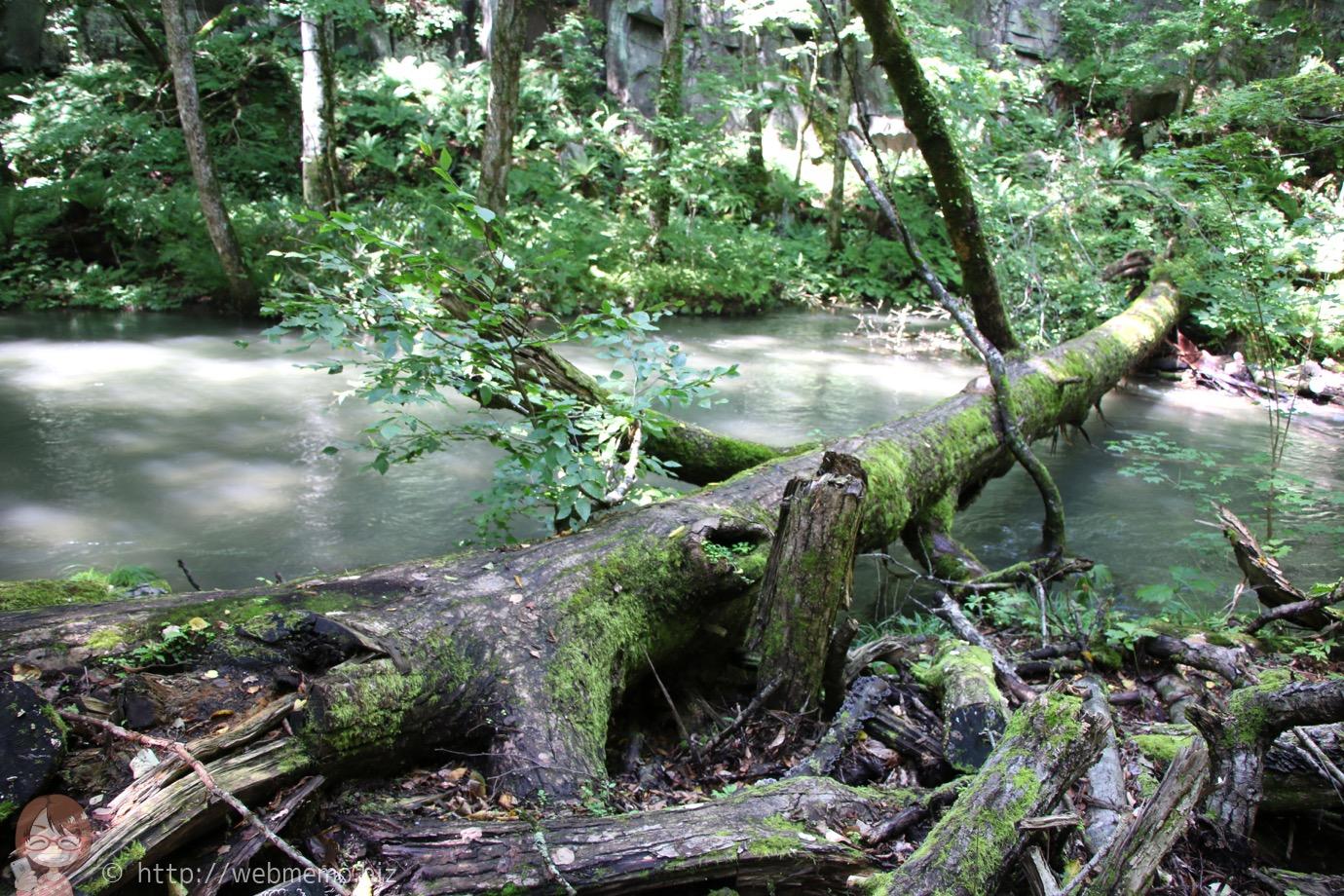 奥入瀬渓流 手付かずの自然