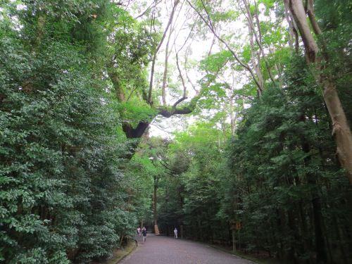 木々に囲まれた綺麗な道