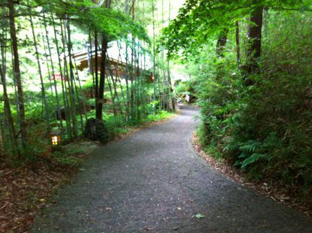 滝に辿り着くまでの林道