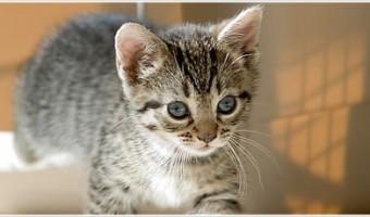 eye-cat.jpg