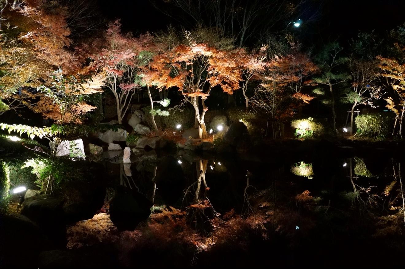 水面に映るライトアップ紅葉が幻想的で綺麗でした。