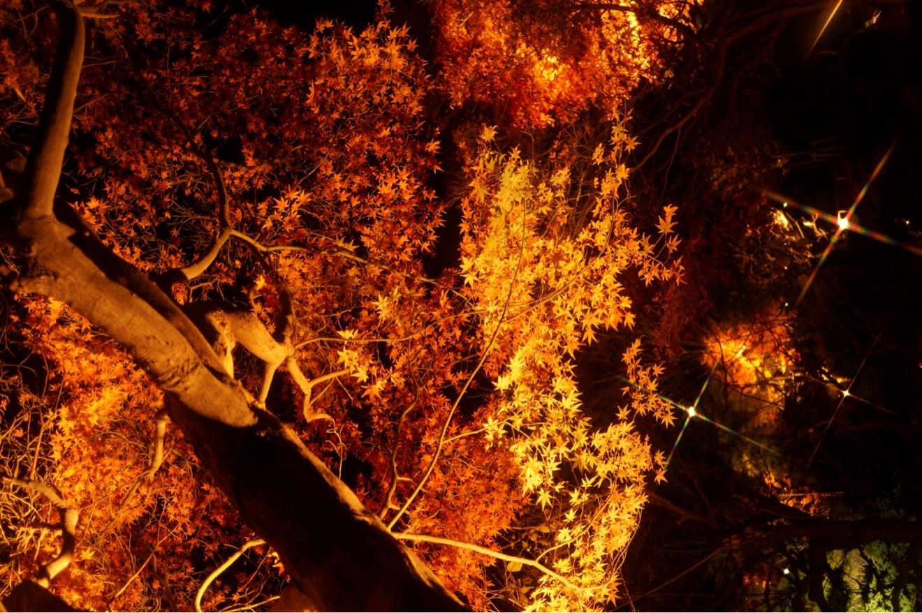 クロスフィルターで紅葉のライトアップ撮影