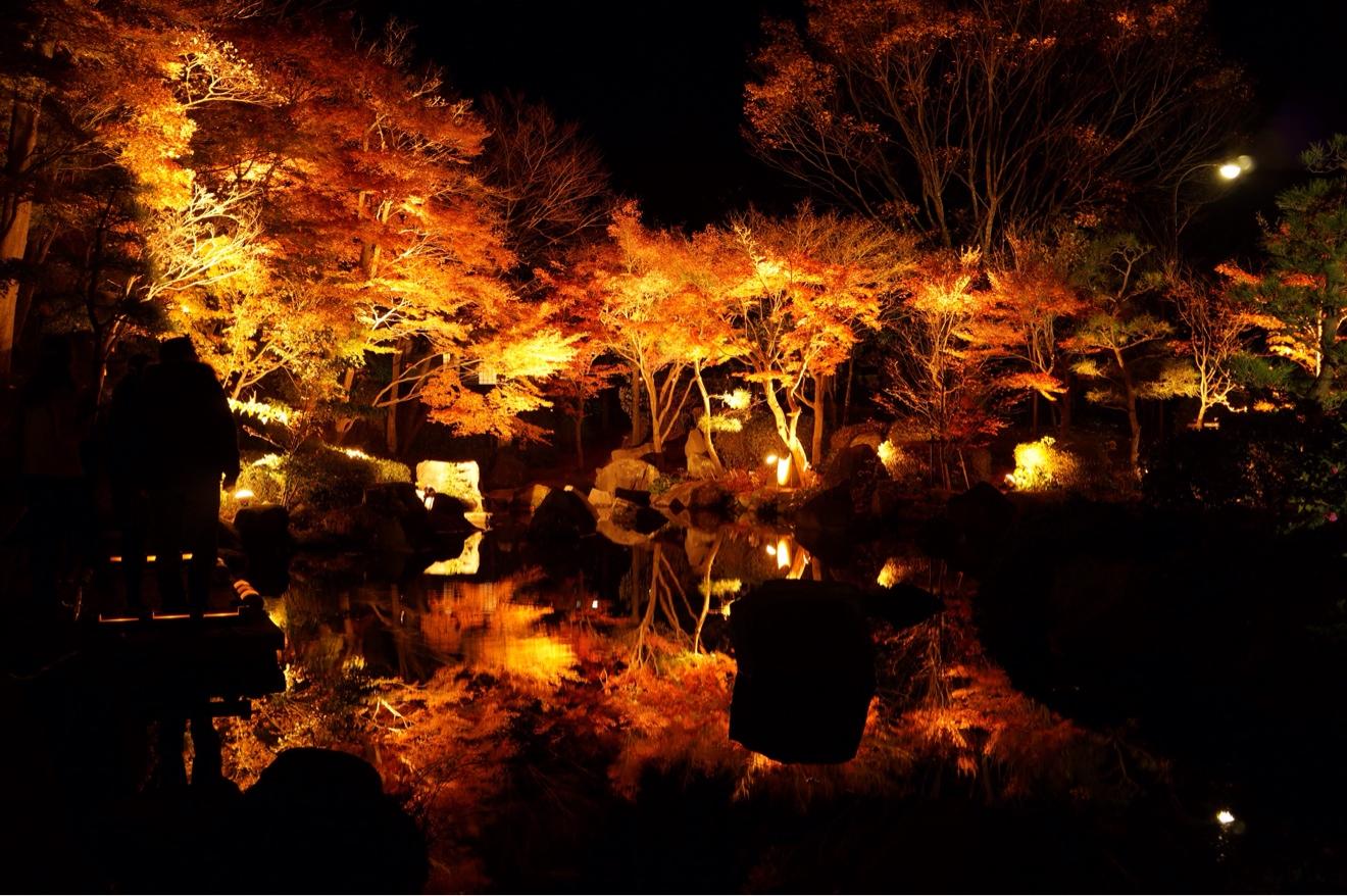 水面に映る紅葉ライトアップ