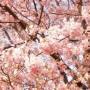 [Å] モブログ花見大会@代々木公園 リアルタイム更新終了!