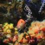 [Å] カメラ初心者な私が「新江ノ島水族館」で70Dを使って魚やイルカが止まった写真を初撮り