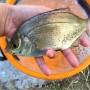[Å] 神奈川県の釣り場「野島公園」は駐車場・トイレ完備!釣れた魚のご紹介【釣り録06】