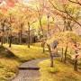 [Å] 箱根美術館の紅葉が一面に広がる姿は圧巻!見応え抜群の紅葉スポット