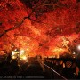 [Å] 神奈川県「大山寺・阿夫利神社」のライトアップ紅葉が見頃!1度は見たい絶景広がる