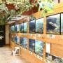 [Å] あわしまマリンパーク「カエル館」50種以上の展示は日本一!カエル探しに夢中