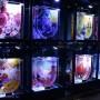 [Å] すみだ水族館の蜷川実花 × クラゲ作品に大興奮…期間限定だから早く見た方がいい!!