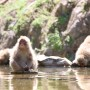 [Å] 長野観光・地獄谷野猿公苑は温泉に浸かる猿や小猿を超間近で見れるおすすめ観光スポット!