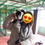 栃木県「那須ワールドモンキーパーク」の頭や肩に飛んでくるエリマキキツネザルが1番楽しい!
