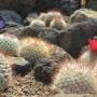 [Å] 伊豆観光「シャボテン公園」サボテンはもちろん動物が放し飼いで楽しすぎ!